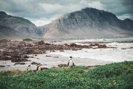 Bettys Bay und die Pinguine