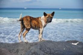 typischer Straßenhund