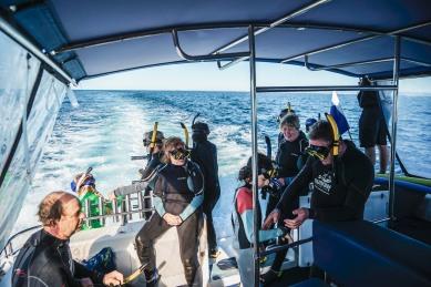 Whale Snorkeling Versuch Nummer 1