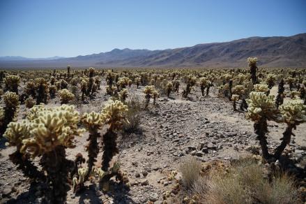Kaktus Garten